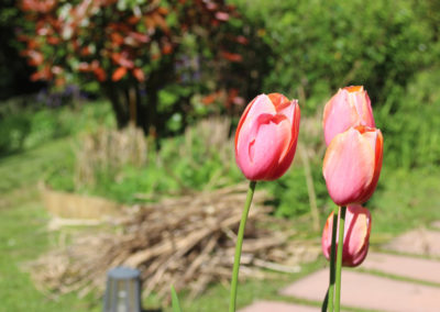 Fleurs du jardin Aretxola