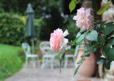 Roses bergerie Aretxola